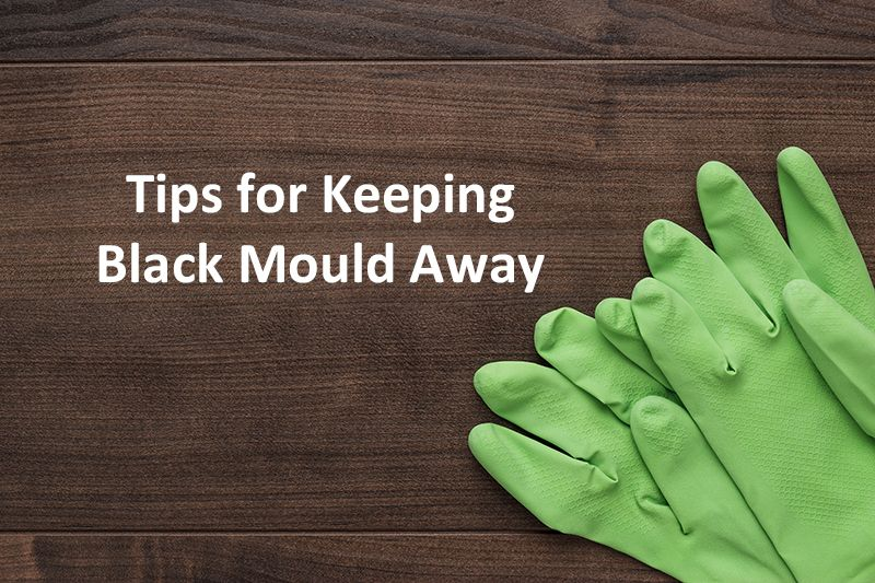 Black Mould in Your Home